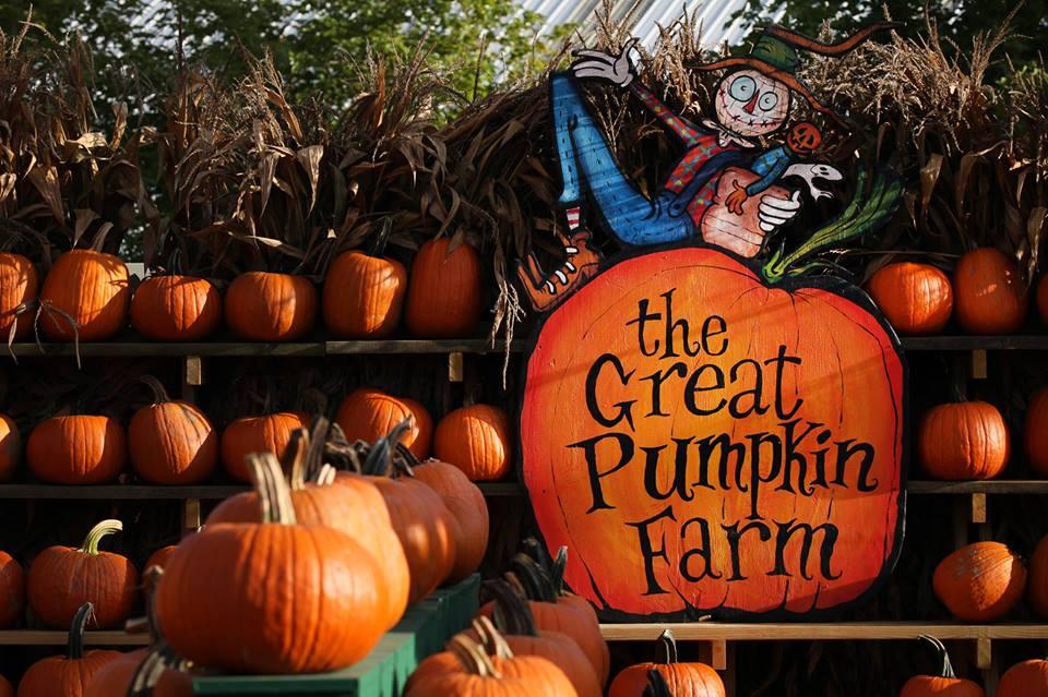 clarence pumpkin farm coupons
